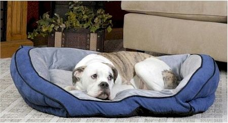 Bolster Pet Couch (Options: Small/Blue)